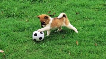 "Во время матча ""Вардар"" — ""Русенборг"" на поле выбежала собака (Видео)"