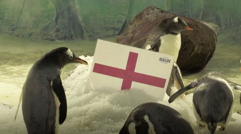 Англия - Швеция: прогноз бирмингемских пингвинов