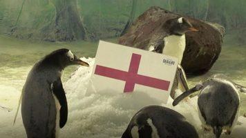 Как болельщик сборной Англии смотрел серию пенальти, стараясь никому не мешать (Видео)