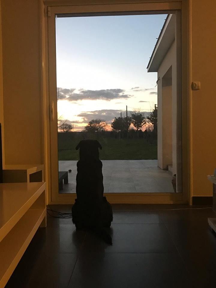 Верная собака Эмилиано Салы все еще ждет возвращения игрока домой (Фото) - изображение 1